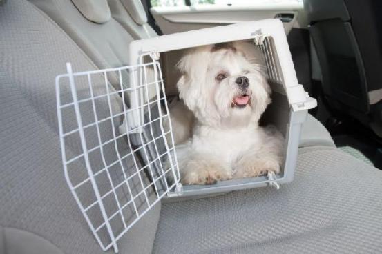 caixa-transporte-para-cachorros